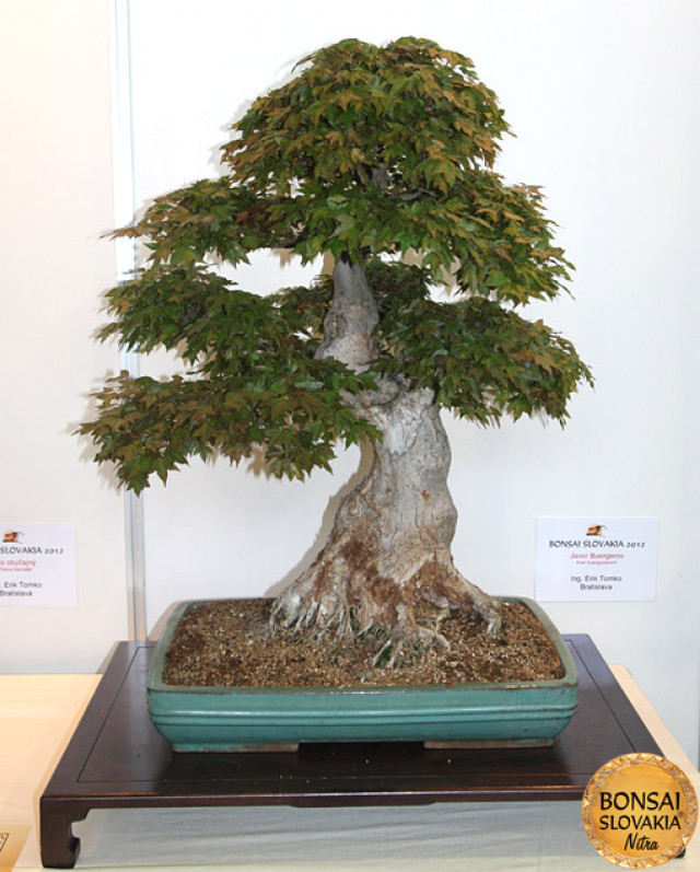 BONSAI & SUISEKI AWARD - Photogalery - Bonsai Slovakia 2012 - International Bonsai, Suiseki and Tea Exhibition, Nitra, Slovakia